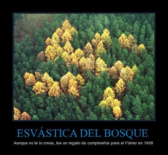 esvastica-del-bosque